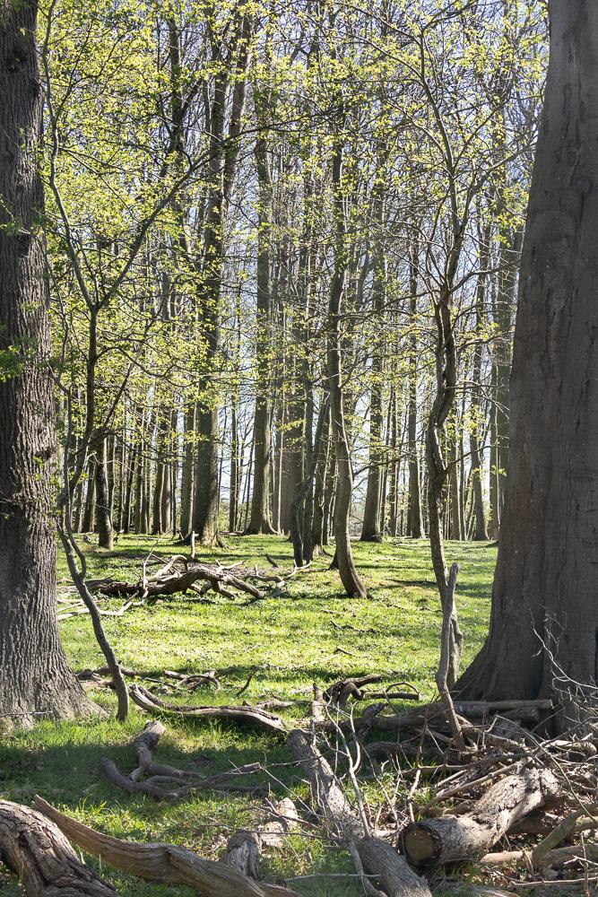 Schönes Schleswig-Holstein: ein Ausflug ins Naturschutzgebiet Geltinger Birk