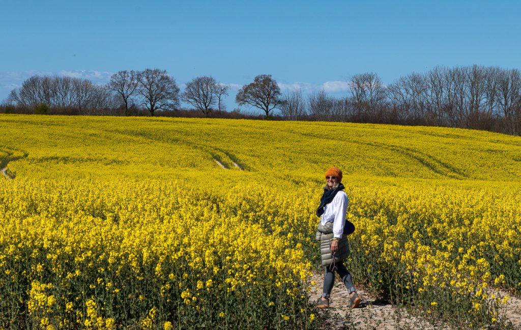 blühende Rapsfelder im Naturschutzgebiet Geltinger Birk