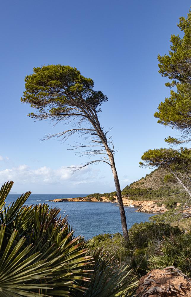 Küstenwanderung auf Mallorca: der Blick auf die malerische Bucht von Es Caló